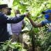 Presidente Medina visita proyectos agroforestales