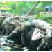 Arroyo Yaguasa agoniza a causa de alta contaminación