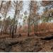 Medio Ambiente dice controla fuegos forestales